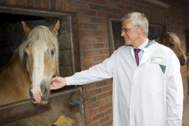 Vlaamse paarden in trek in China