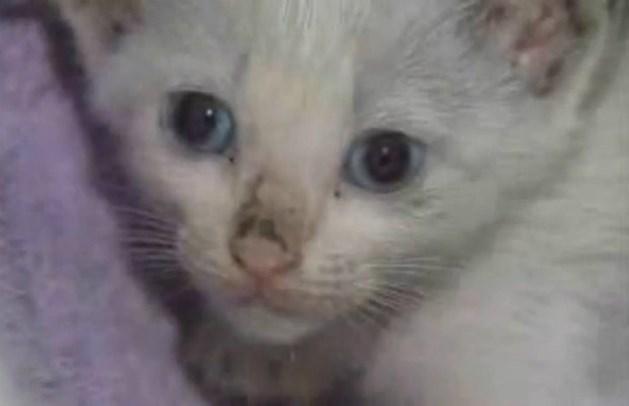 Katje raakt klem onder auto en overleeft rit van 60 kilometer