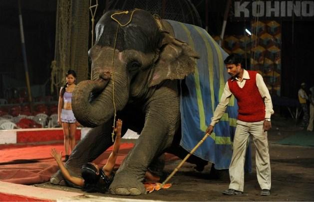 Tachtiger gedood door olifant in Frankrijk