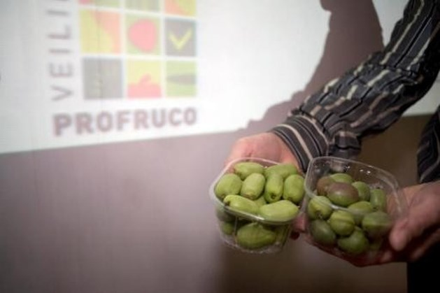 Hoogstratense veiling zet steeds meer in op kiwibes