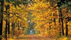 Buitengewoon mooi herfstweer op komst