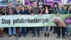 Lommelse burgemeester op kop in betoging tegen nertsenkwekerij
