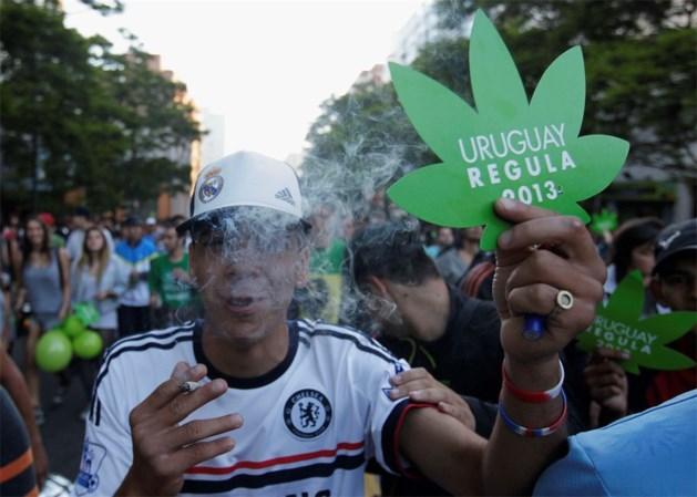 Cannabis volledig legaal in Uruguay