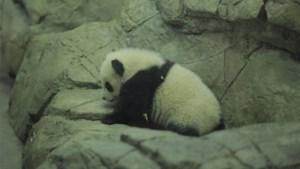 24 uur in D.C.: op babybezoek bij Bao Bao