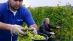 Innovatieve en duurzame agrarische opportuniteiten dankzij Business Development Manager Agropolis