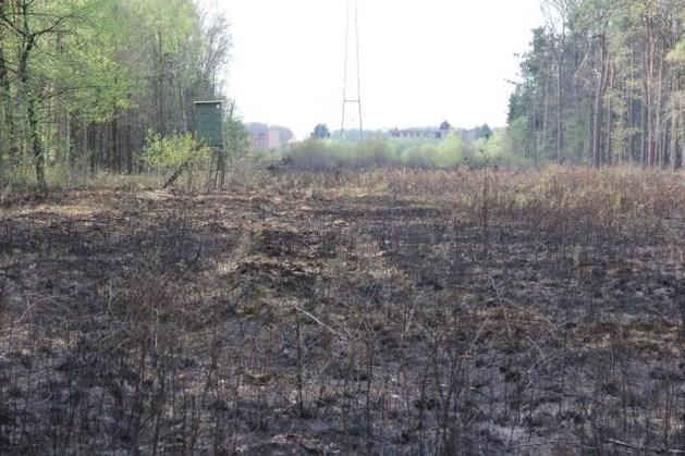 Brand verwoest zesduizend vierkante meter vegetatie en bos