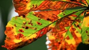 Tips: Zo breng je de herfst naar binnen